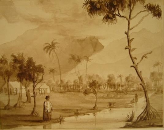 HAWAII. - Tropical plantation scene.